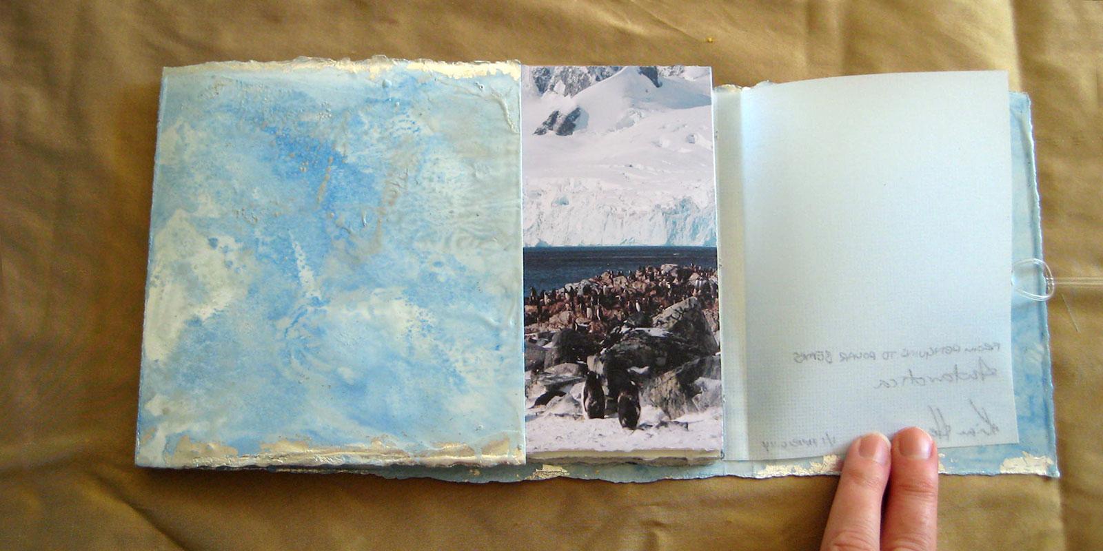 From Penguins to Polar Bears - Antarctica
