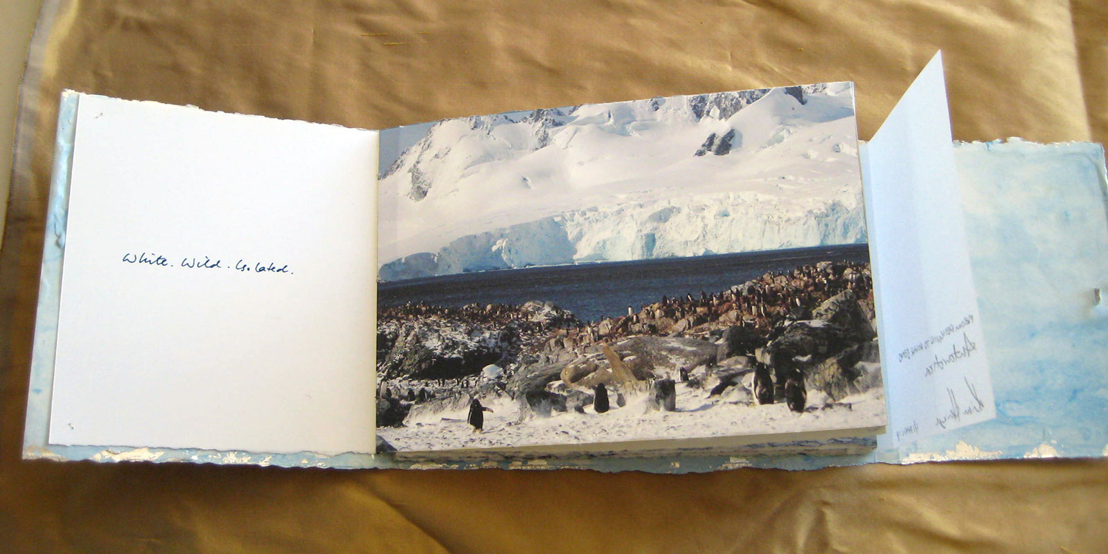 From Penguins to Polar Bears - Antarctica - page 1