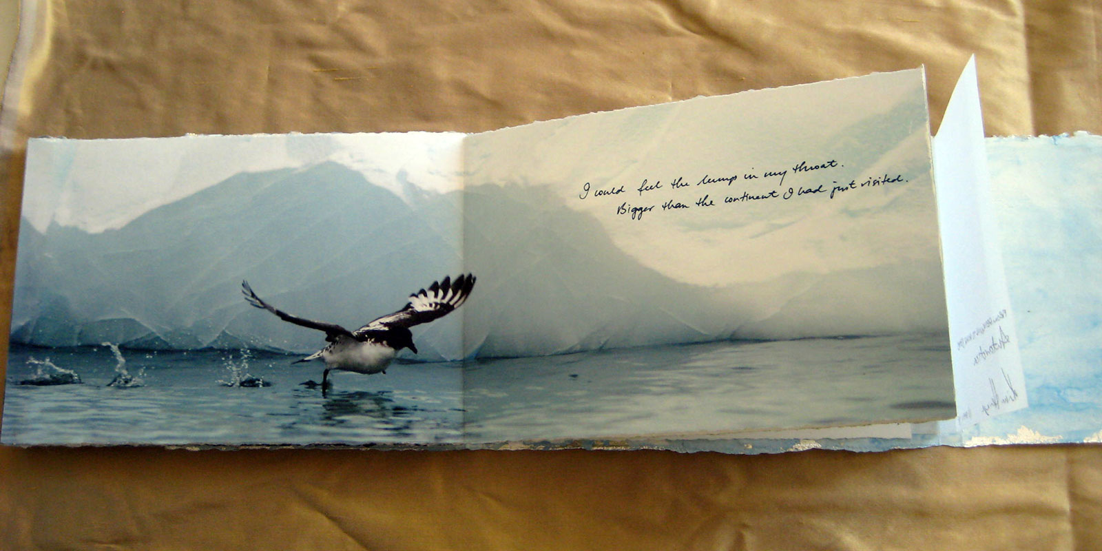 From Penguins to Polar Bears - Antarctica - page 6