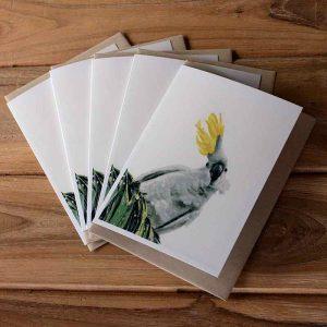 Blank Greeting Card Pack - Ruffled Feathers - by Kim Herringe
