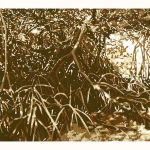 Percys Mangroves - reductive linoprint by Kim Herringe