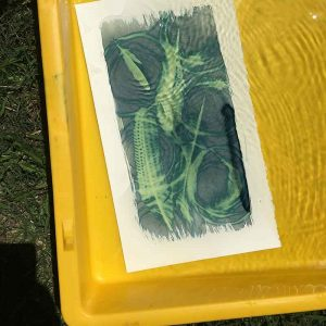 washing out your cyanotype in a tub of fresh water