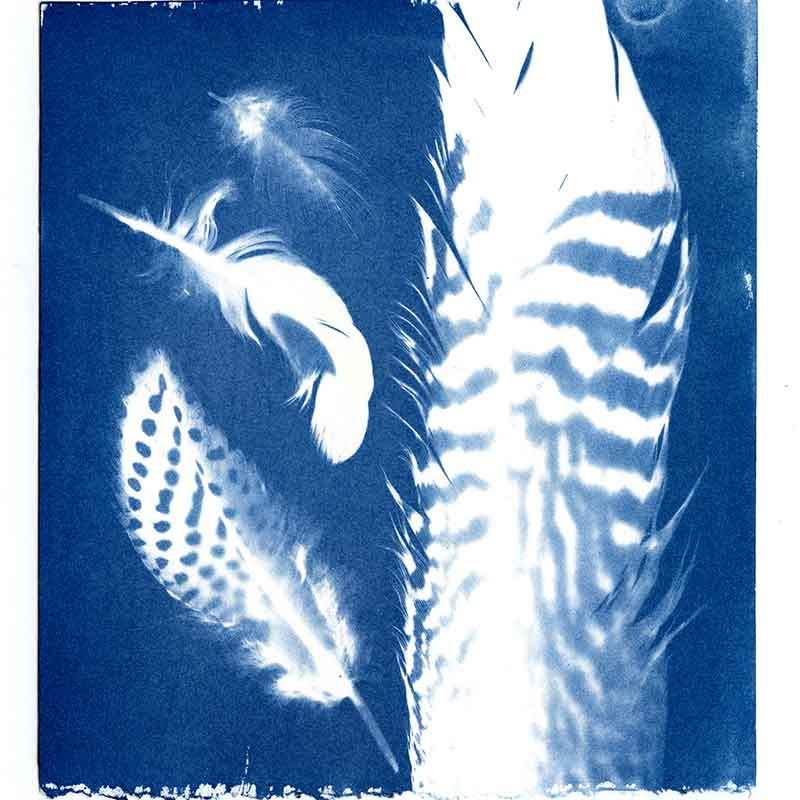 Feathers cyanotype by Kim Herringe