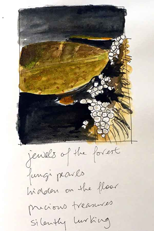 Jewels of the forest. Djuli Djuli