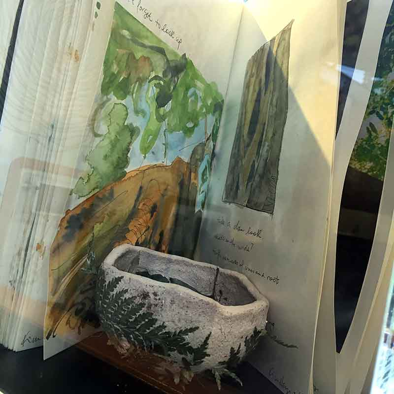 Mary Cairncross BioBlitz visual diaries on display