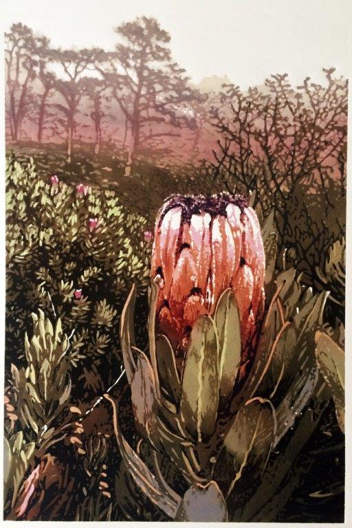 Table Mountain Protea, Joshua Miles reduction linocut
