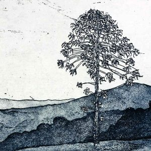 Aluminium Metal Plate etching - Bunya Tree