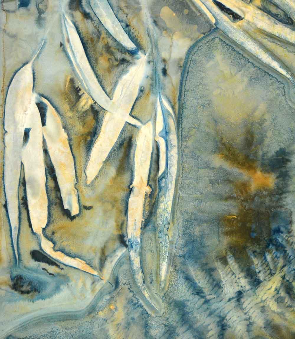 wet cyanotype on Fleur De Coton Printmaking Paper